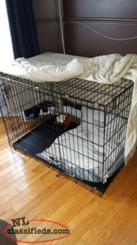 paradise kennels new brunswick reviews